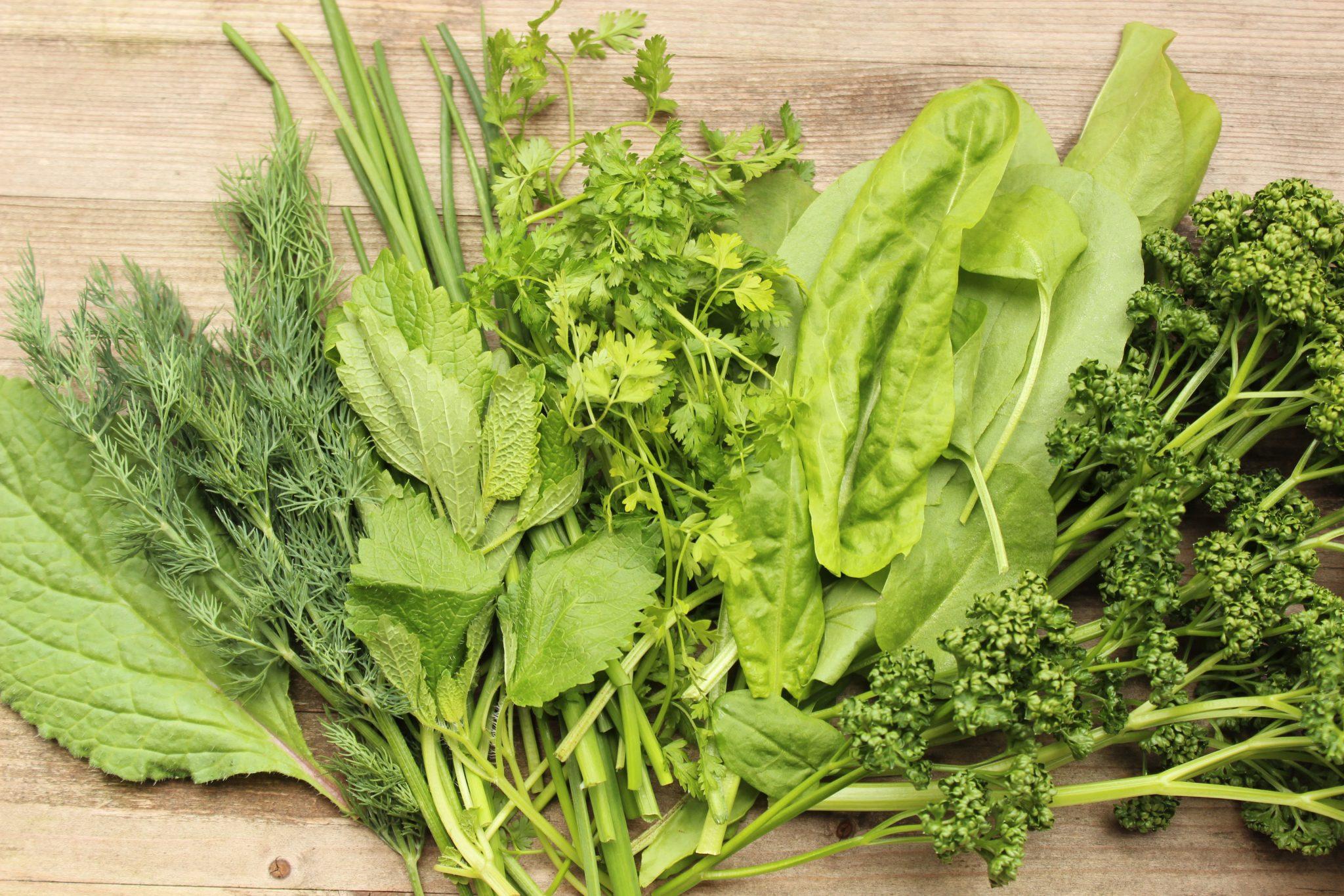7 Kräuter für die Grüne Sauce