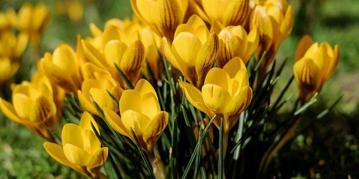 7 Tipps gegen Frühjahrsmüdigkeit: Mit Schwung und Elan ins Frühjahr
